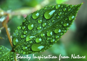 Beauty Inspiration From Nature